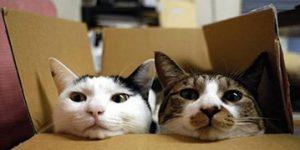 déménager avec un chat