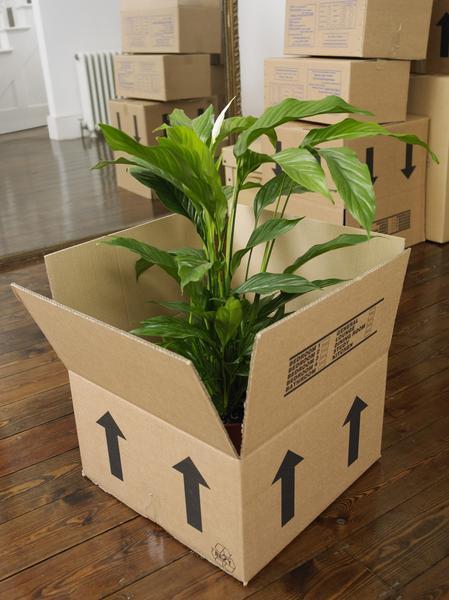 plante carton déménagement